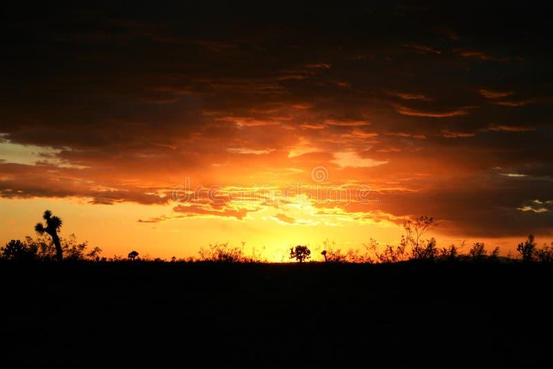 Заход солнца пустыни Мохаве стоковые изображения rf