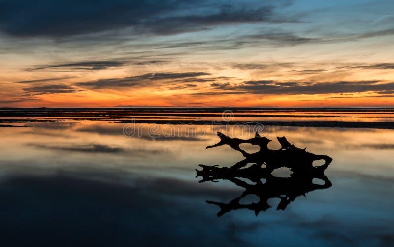 Заход солнца древесины смещения стоковое изображение