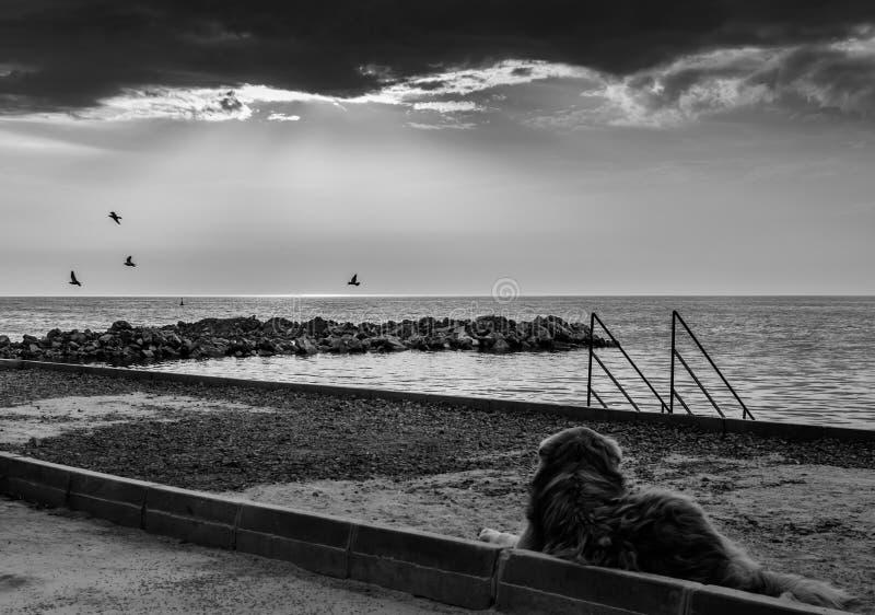 Заход солнца собаки улицы наблюдая с летящими птицами стоковое фото rf