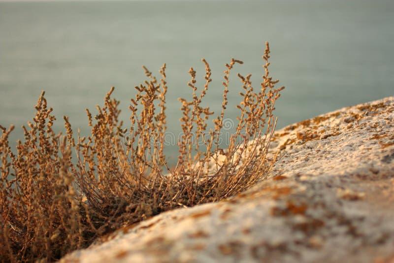 Заход солнца Трава на песчаном пляже стоковое фото rf