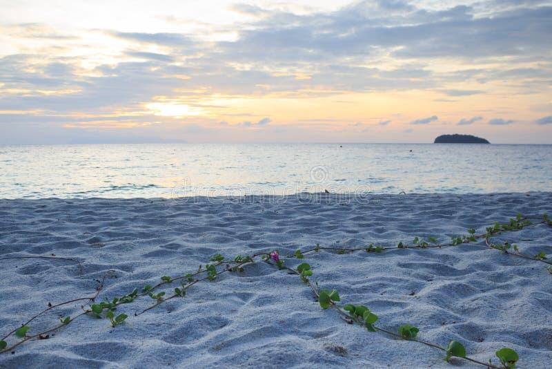 Заход солнца утра ясно желтый теплый и зеленая трава воды на белом песке стоковые изображения rf