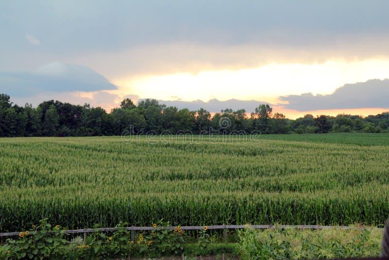 Заход солнца фермы с солнцецветами стоковые фото