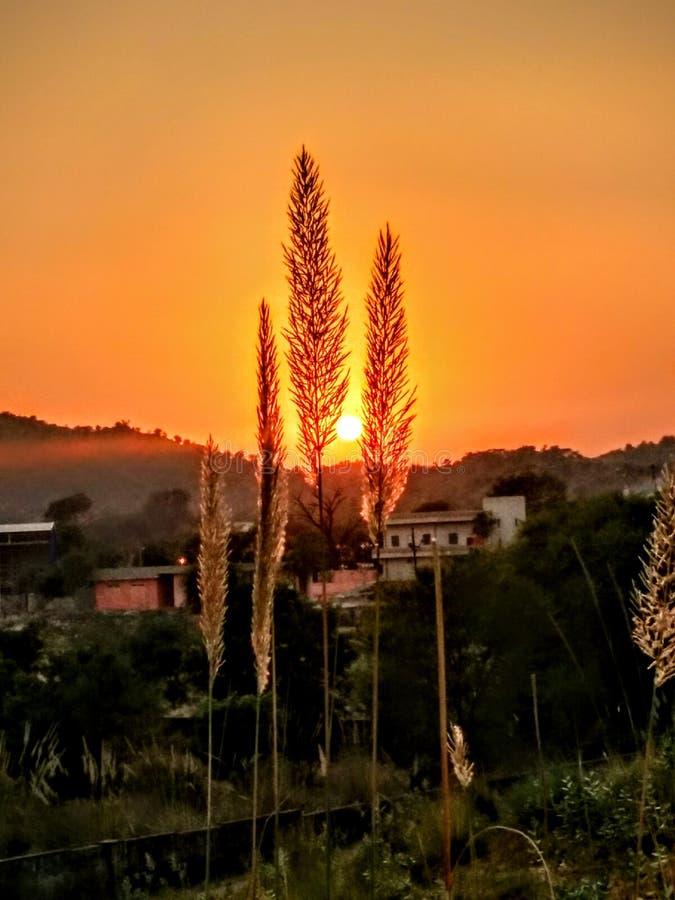 Заход солнца & цветки стоковое изображение