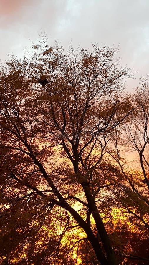 Заход солнца через деревья стоковое фото rf