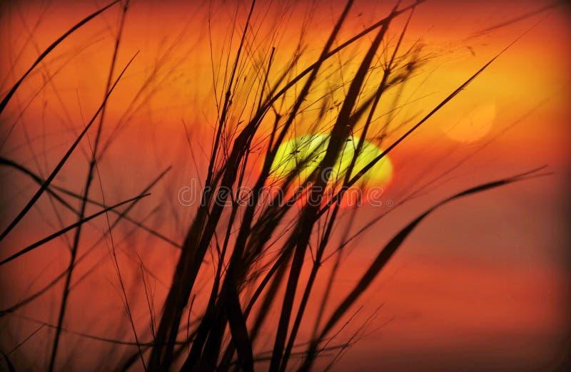 Заход солнца через тростники стоковые изображения