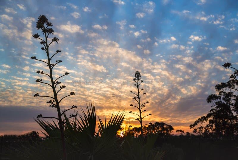 Заход солнца Andalucian стоковое изображение