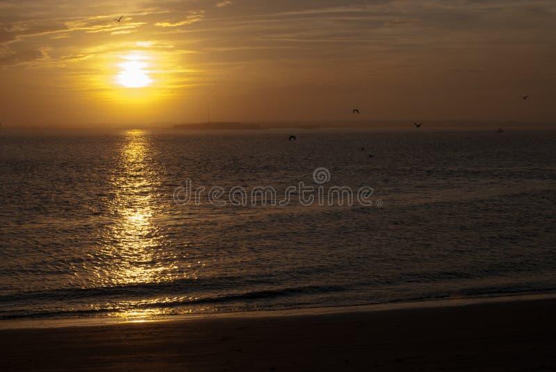 Заход солнца FT Sumter птицы стоковое фото