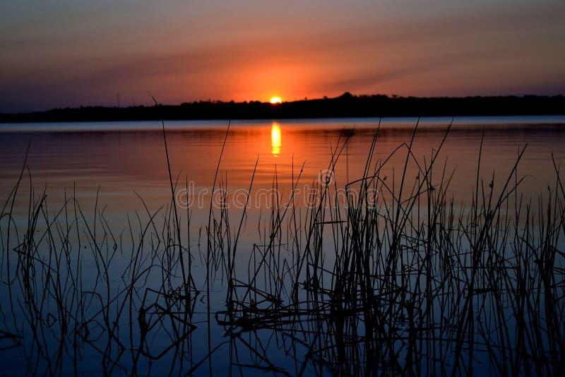 Заход солнца 2 Reed стоковые изображения rf
