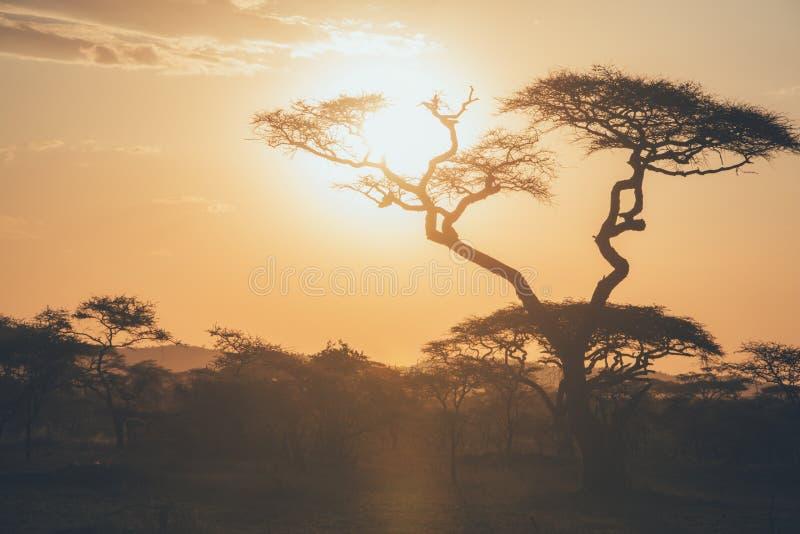 Заход солнца Serengeti стоковая фотография rf