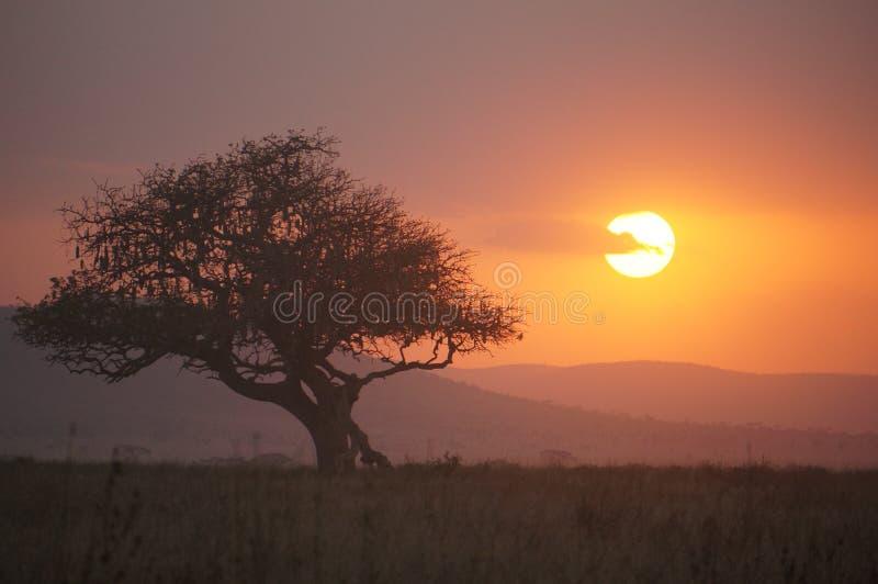 Заход солнца Serengeti NP, Танзания стоковая фотография rf