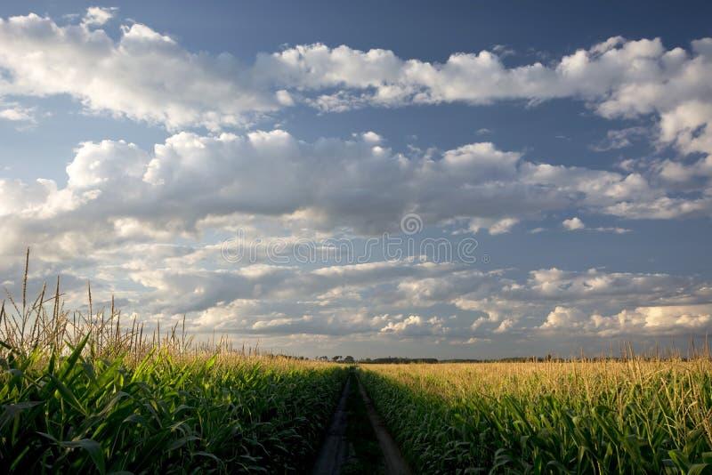 Download Заходящее солнце над кукурузным полем и грязной улицей, Midwest, США Стоковое Фото - изображение насчитывающей лужок, естественно: 33730296