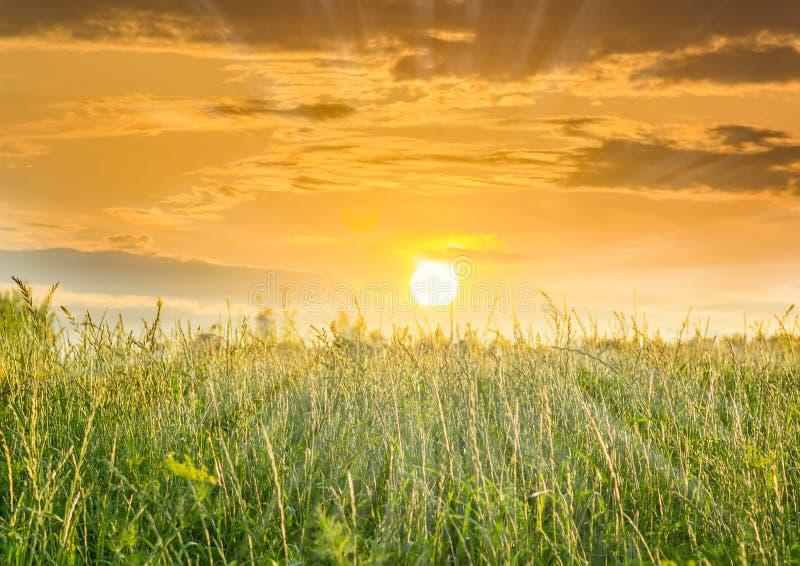 Заходящее солнце над полем с высокой травой стоковые фотографии rf