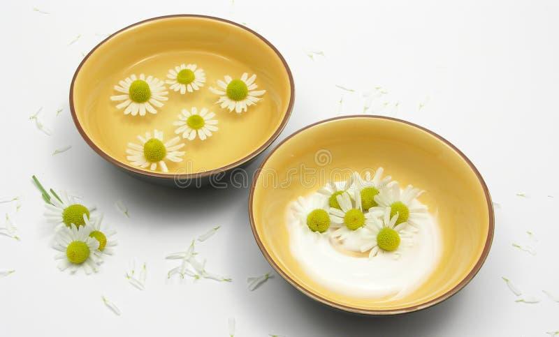 зацветает вода стоцвета cream стоковые изображения rf