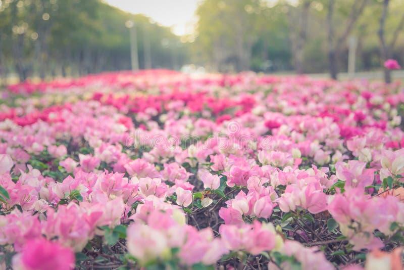Зацветать бумажного цветка стоковые фотографии rf