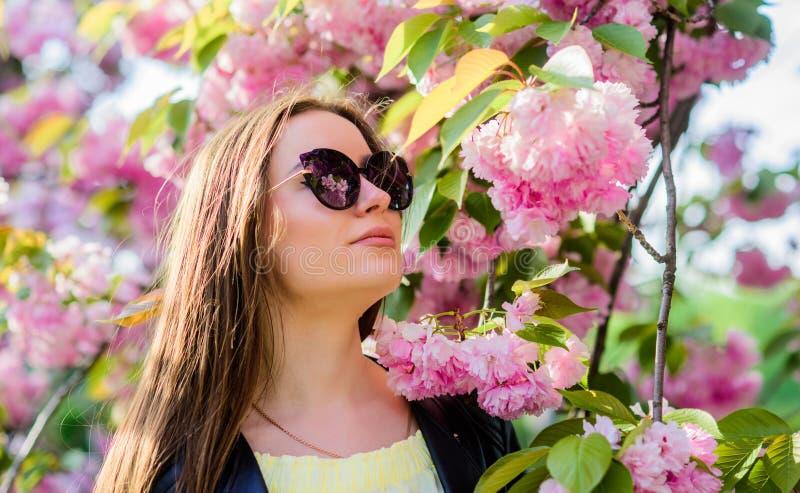 Зацветать дерева Сакуры Мягкий и нежный Шикарный цветок и женская красота Цветене цветка женщины весной Skincare и спа стоковые изображения rf