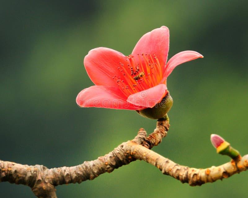 зацветая весна капка цветка стоковое изображение rf