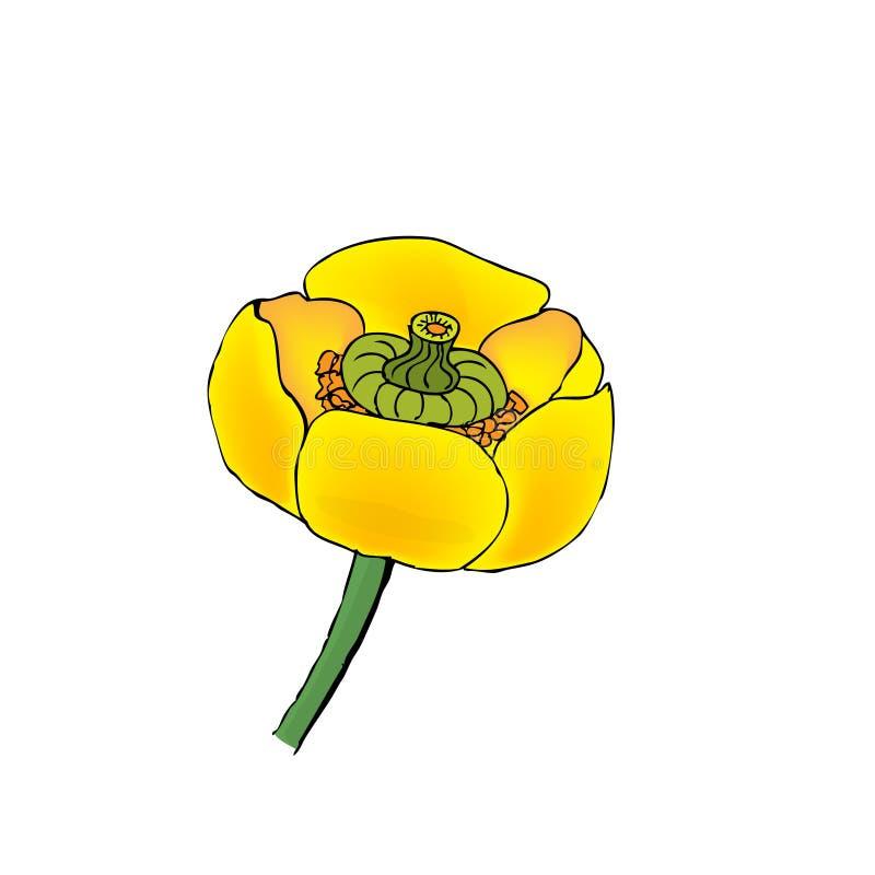 Зацветая желтый конец вод-лилии вверх иллюстрация штока