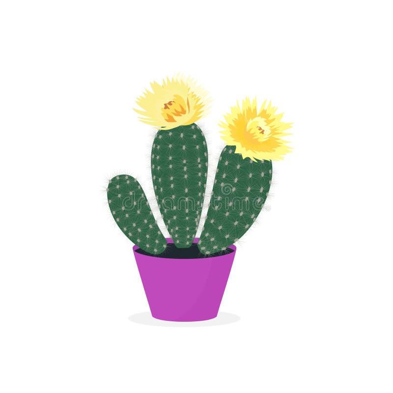 Зацветая кактусы бак изолированный кактусом В горшке домашний завод иллюстрация штока