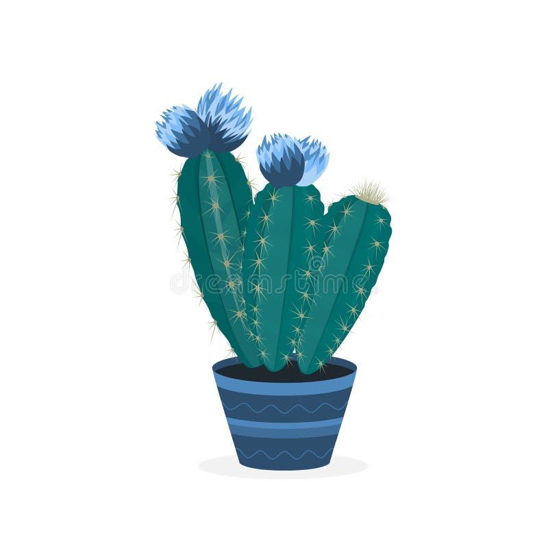 Зацветая кактусы Цветя кактус в баке В горшке домашний завод иллюстрация штока