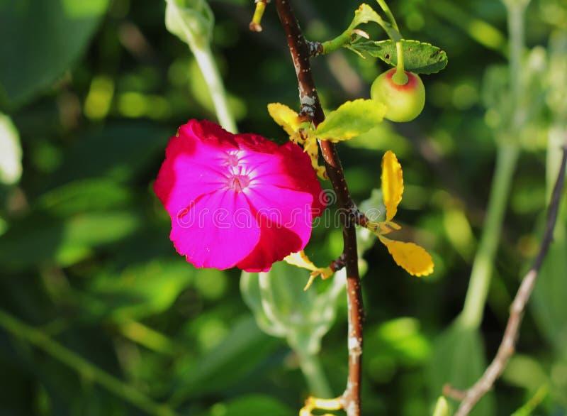 зацветая красный цвет цветка стоковая фотография