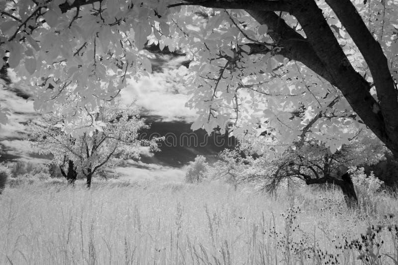 зацветая поле стоковые фотографии rf
