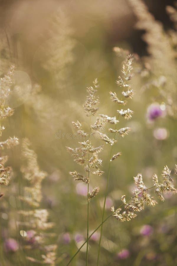 Download Зацветая полевые цветки стоковое фото. изображение насчитывающей glade - 37927888