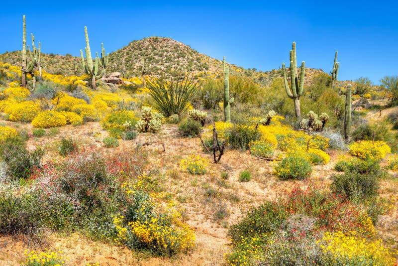 зацветая пустыня стоковое фото