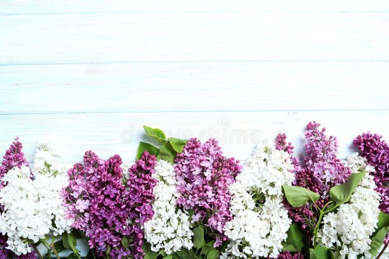 зацветая сирень цветков стоковая фотография rf