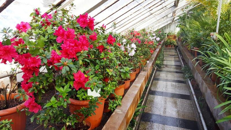 Зацветая цветки в ботаническом саде стоковые изображения