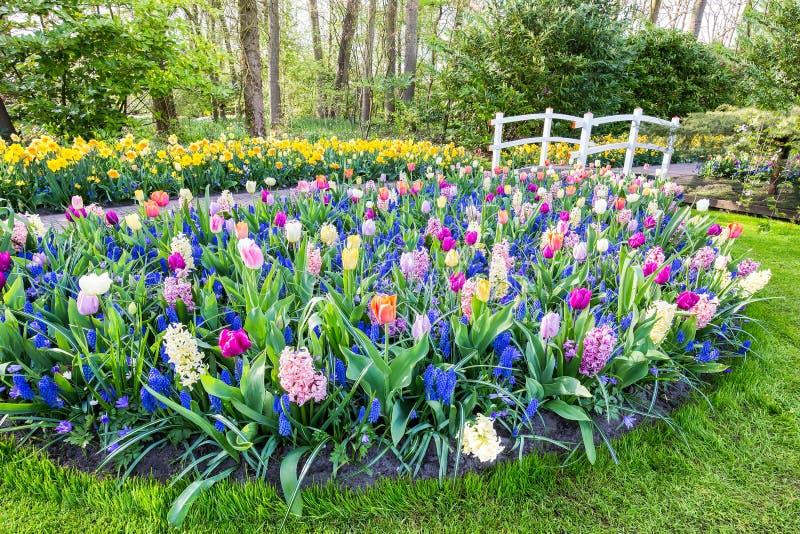 Зацветая цветки с гиацинтами и мостом тюльпанов стоковое фото rf