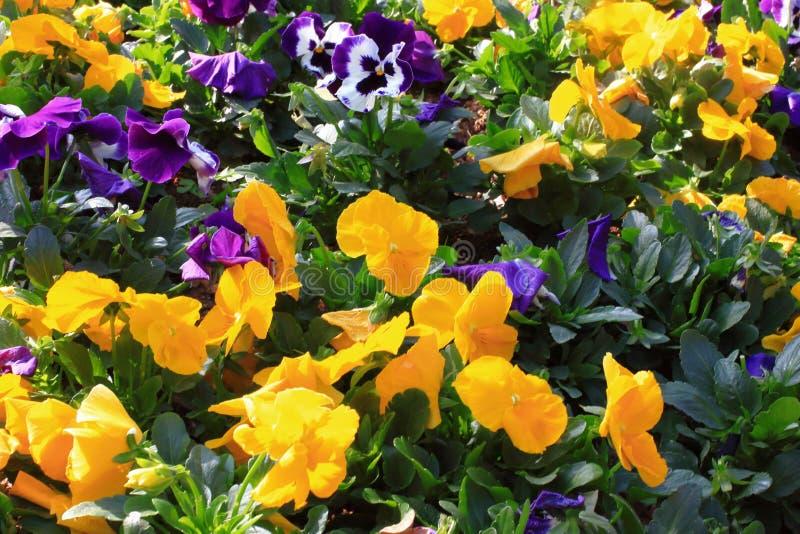 зацветая цветки стоковые изображения