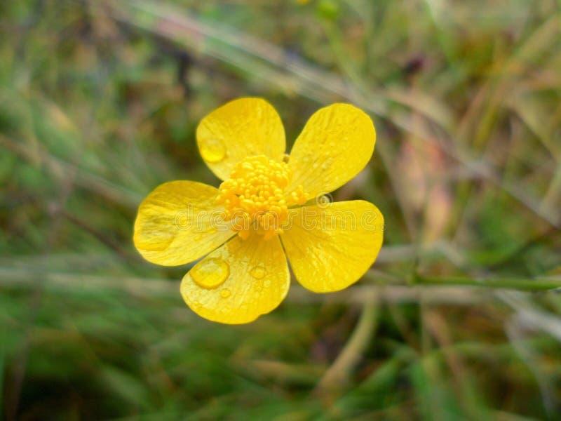 Зацветая цветок в лете стоковое фото rf