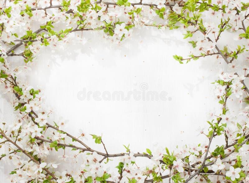 Зацветая (цветя) ветви дерева как круглая рамка на бело- предпосылке весны стоковое изображение