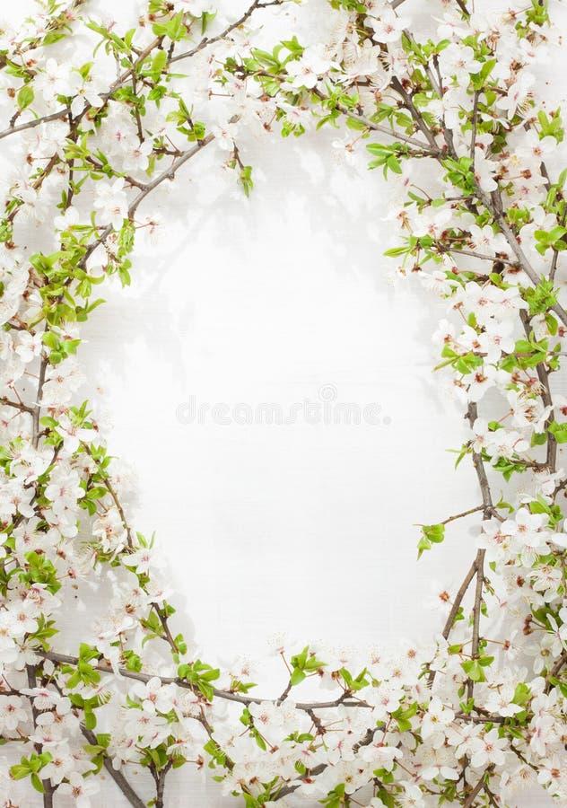 Зацветая (цветя) ветви дерева как круглая рамка на бело- предпосылке весны стоковые изображения rf