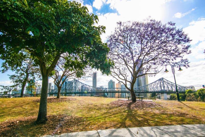Зацветая Jacaranda в Брисбене Австралии стоковая фотография rf