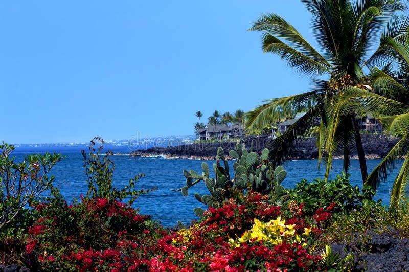 зацветая tropicals стоковое изображение