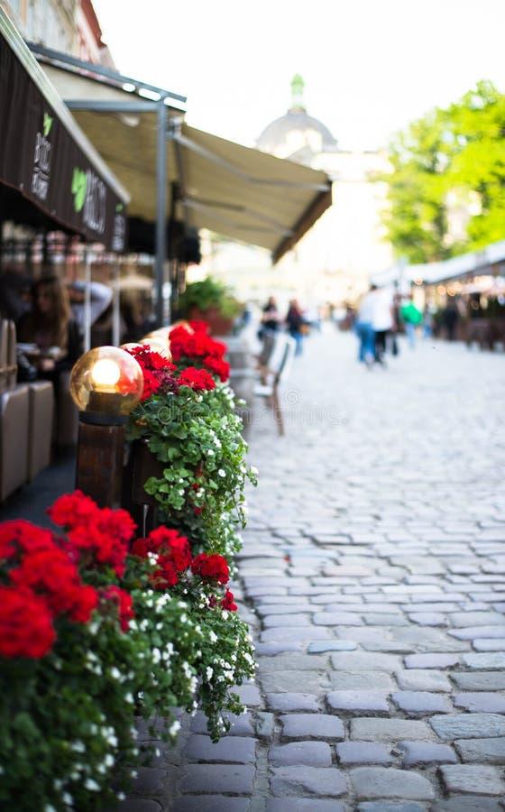Зацветенные цветки в стоковое фото