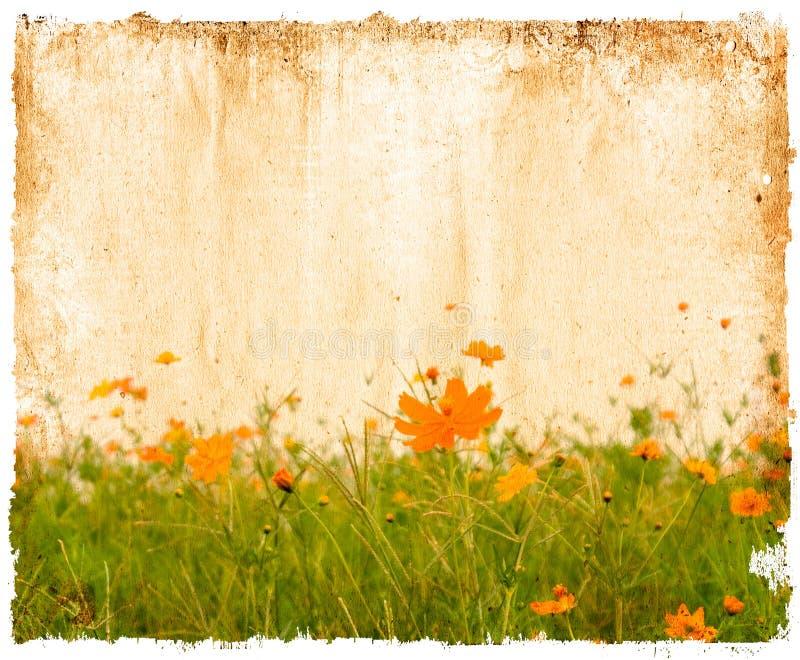 зацветите бумага стоковая фотография rf