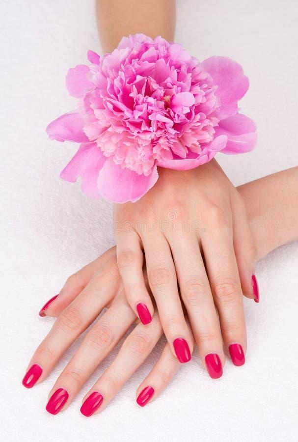 зацветите взгляд сверху пинка manicure стоковая фотография rf