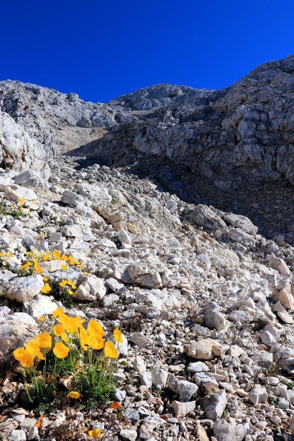 зацветите в задней могущественной горе, Словении стоковое изображение rf