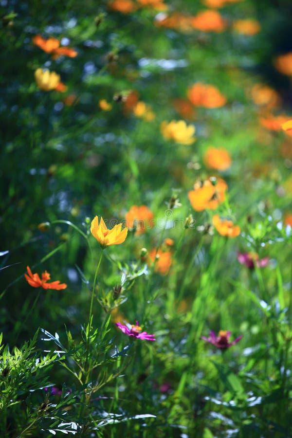 зацветите желтый цвет Стоковое Фото