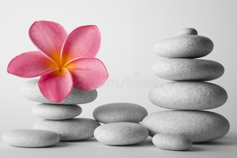 зацветите камень стога frangipani стоковые изображения rf