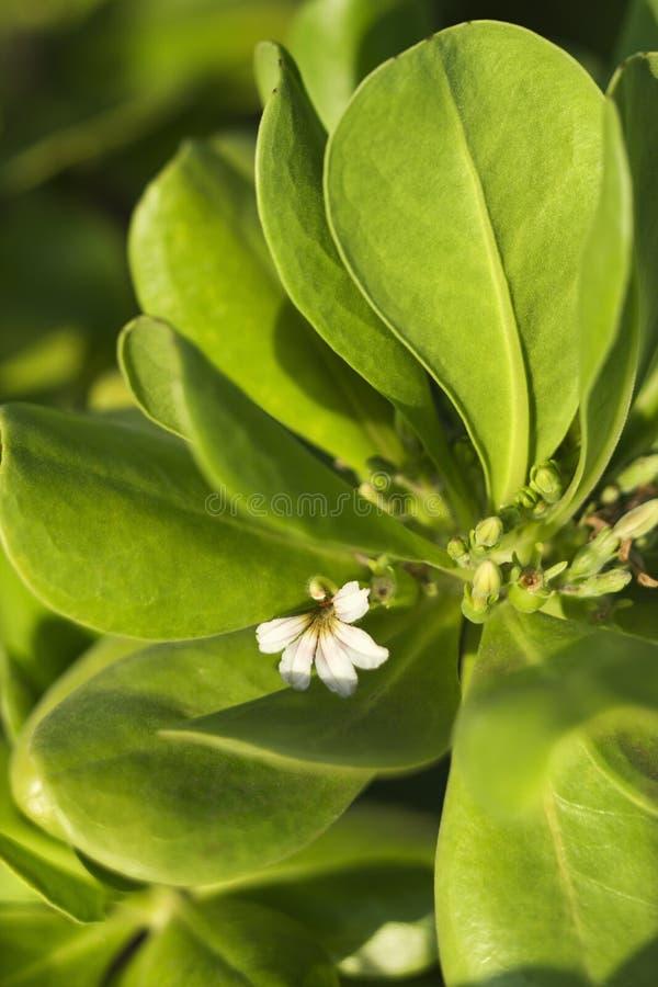 зацветите листья стоковая фотография rf