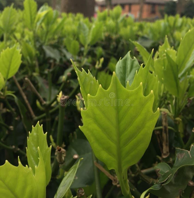 Зацветите небо коричневого цвета зеленого цвета дерева желтого цвета одуванчика солнца дня маргаритки природы весны зеленого цвет стоковые фото