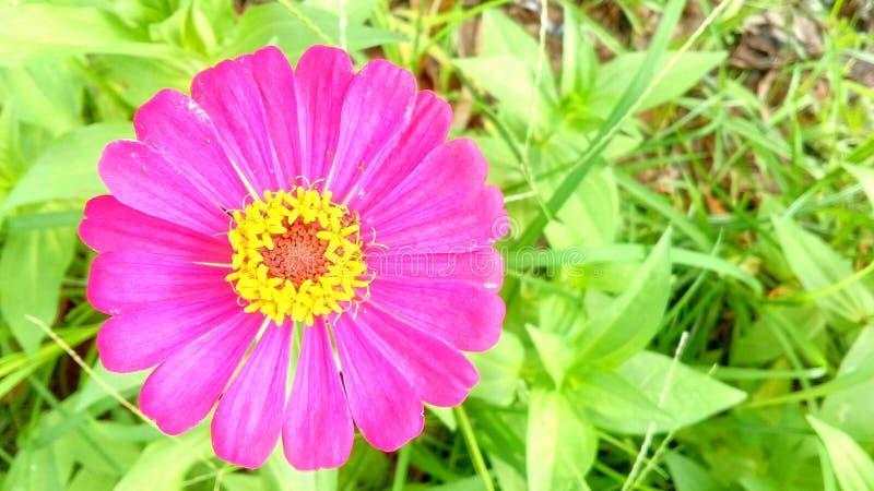 зацветите одиночная стоковое фото rf