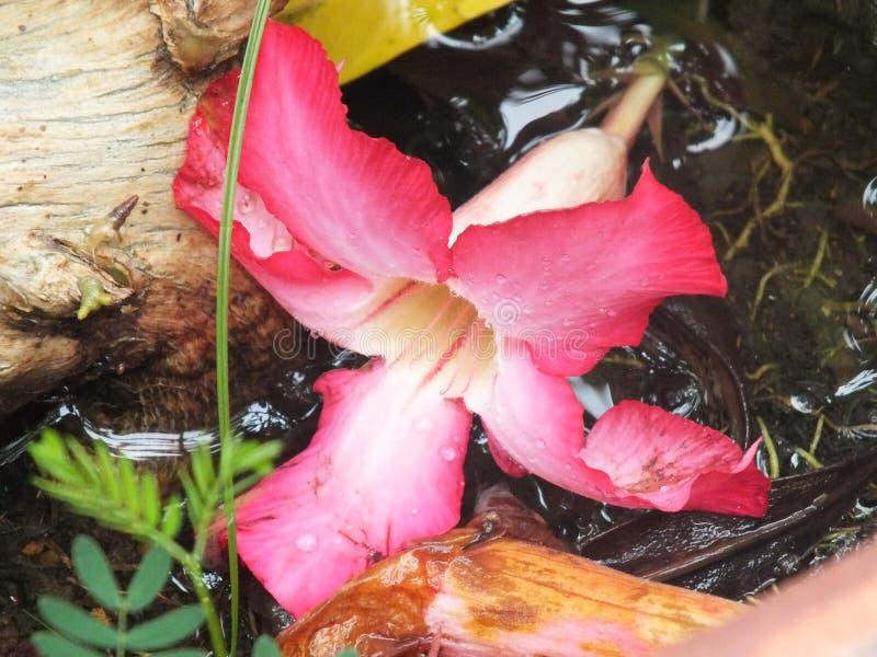 Зацветите падение стоковые фотографии rf