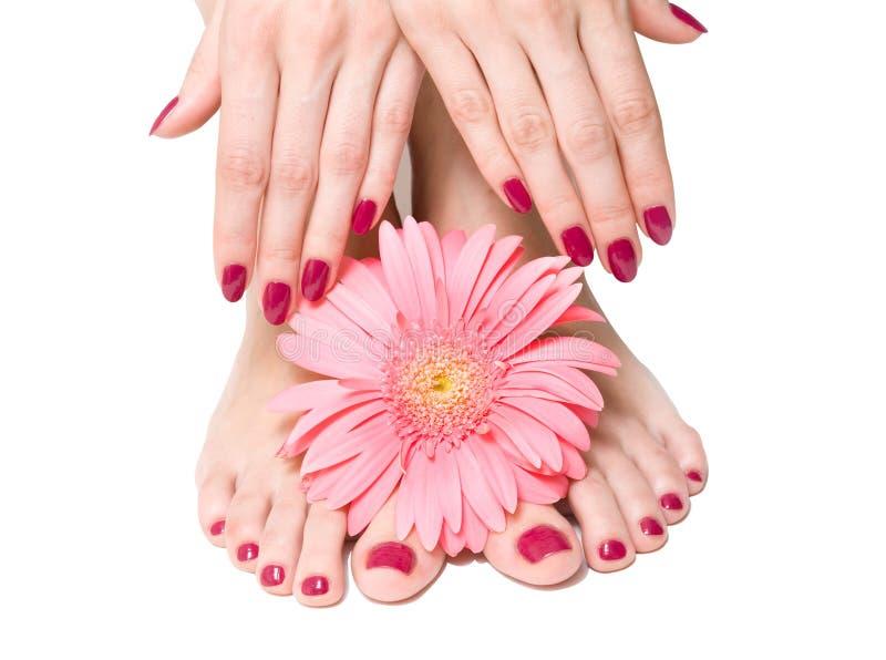 зацветите пинк pedicure manicure стоковое изображение