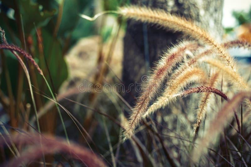 Зацветите трава в саде около дерева стоковые изображения rf