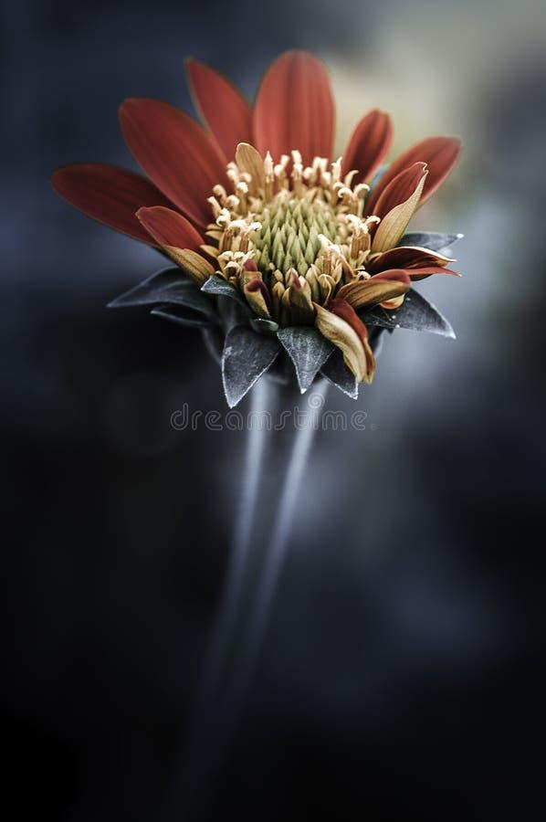 Download Зацветите цветки дизайна черные винтажные красивые сделанные с цветом F Стоковое Изображение - изображение насчитывающей зацветая, скомкано: 40588829