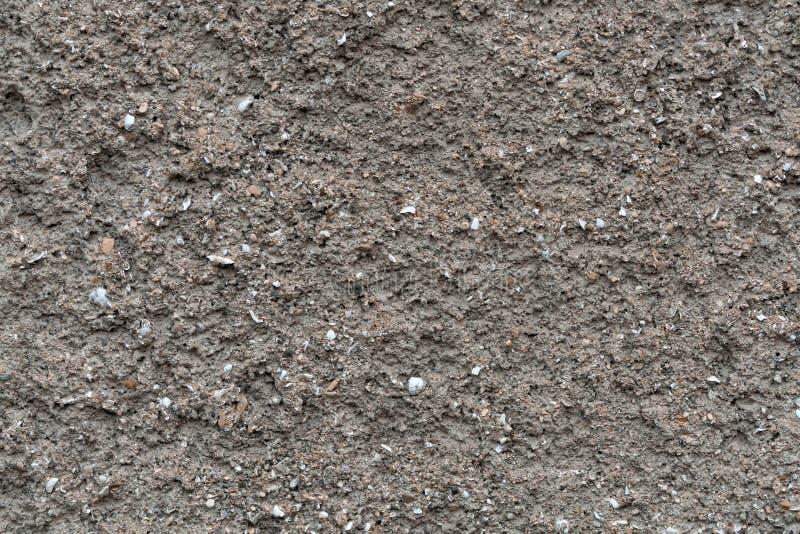 Заштукатуренная стена песка моря с вкрапленностями раковин малых морских наяд стоковая фотография